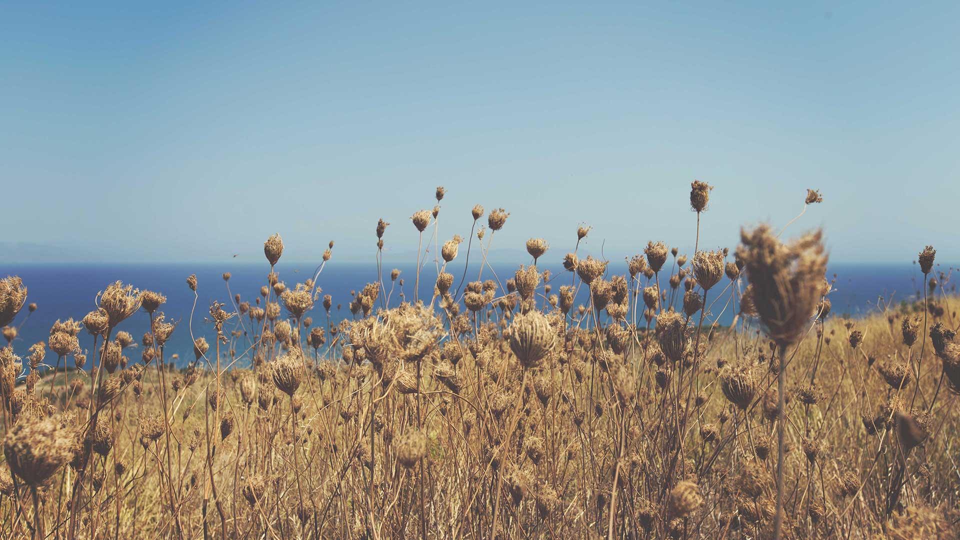 dry_fields.jpg